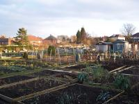 The allotments in winter - click for full size image
